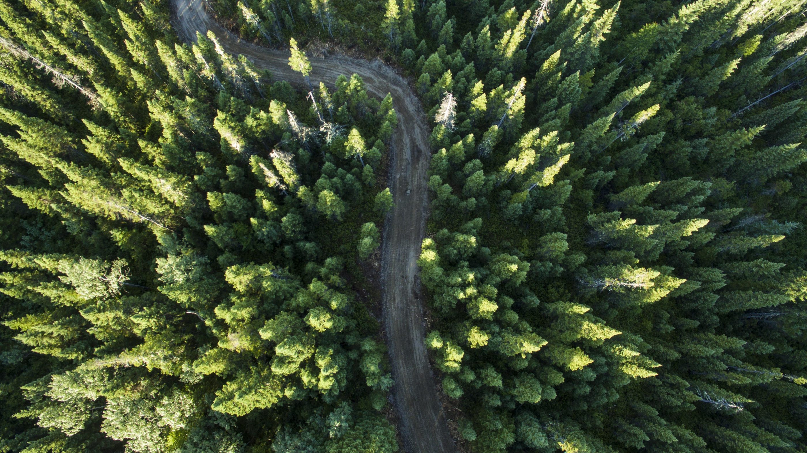 Aerial Image of Forestry Road